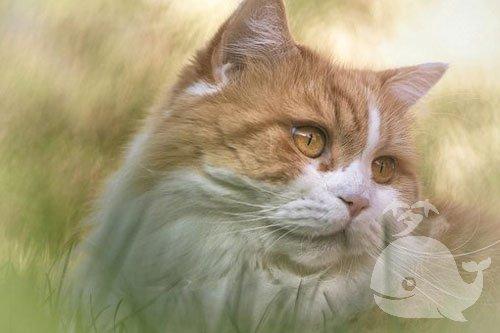 梦见自己的猫受伤