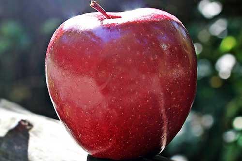 孕妇梦见红苹果