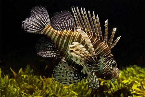 夢見特別大的魚
