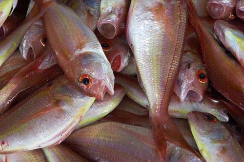 梦见死鱼和活鱼