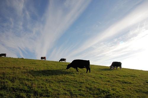 梦见两只强壮的牛