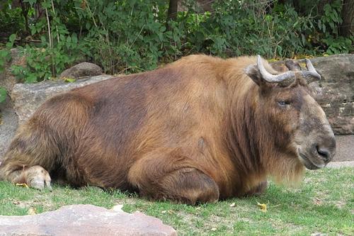 梦见牛跟我走