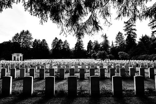 梦见坟墓附近有很多树