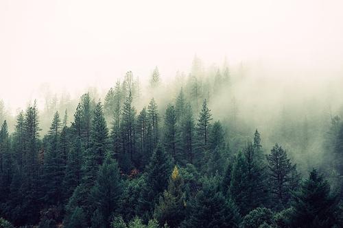 梦见别人家门口绿油油的树