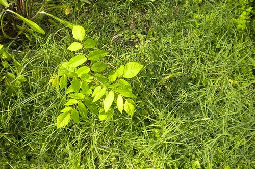 梦见种树苗给树浇水
